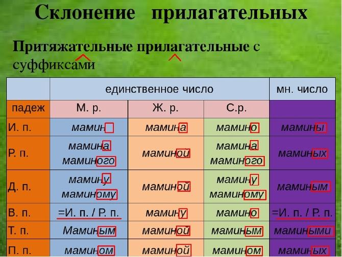 Притяжательные имена прилагательные: определение, правописание, примеры